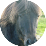 Gesundheit Pferd