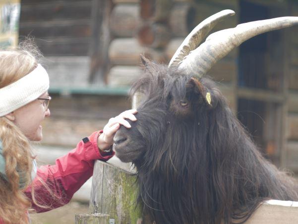 Cranio Sacral Therapie für Tiere